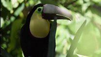 Como tucano com prótese 3D no bico virou símbolo da luta em defesa dos animais