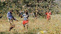 Worst locust swarm in 25 years