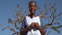 Baobab, le fruit du succès