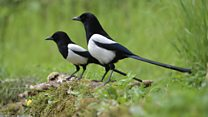 'If I don't see two magpies, I get panic attacks'