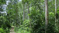 Creating sustainable forests in Ghana