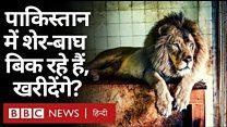 पाकिस्तान में बिक रहे हैं शेर और बाघ
