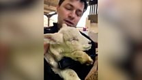 Search for children who tortured lamb