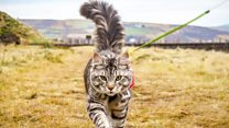Meet the cat that loves being walked around Yorkshire