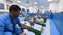 مستشفى في الإمارات خاص بالرعاية الصحية للصقور ومعالجتها