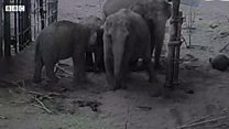 CCTV captures elephant birth at zoo