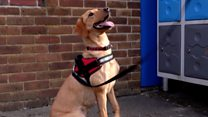 Schools turn to sniffer dogs to combat drugs