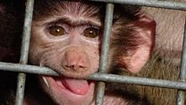 Diego the baby baboon that took rescuers by surprise