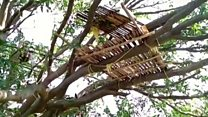 Coronavirus: Treehouse isolation for some in India