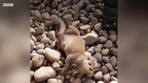 Wildlife park wardens enjoy quality time with animals