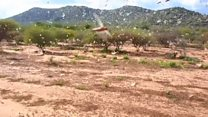 East Africa's biggest locust swarms in 70 years