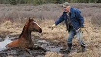 Wild horse rescued from bog