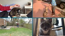 Coronavirus: What will happen to pets after lockdown? thumbnail