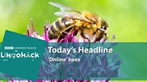 online bees.jpg