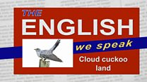 Tews cuckoo web image
