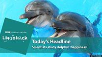 Cientistas dizem que golfinhos em cativeiro são felizes - graças ao contato com humanos