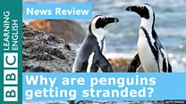 News_Review_YOUTUBE_penguins.j...