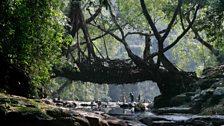 Human Planet: Rivers / Meghalaya, India