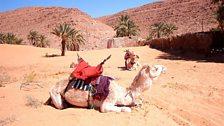 Camels in Algeria