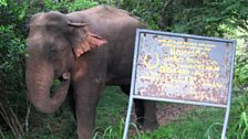 Sri Lanka, elephant