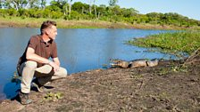 Chris and a caiman