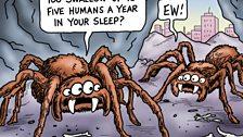 April 2012: Spider Watch