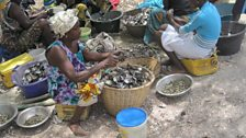 Shucking oyster in a Gambian village