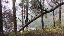 Aig bruaichean Loch Eich
