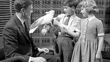 David Attenborough, 1958