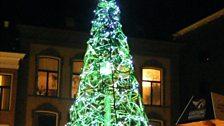 Groningen bike tree