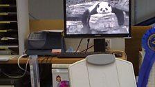 Bernadette Randall proves that PandaCam is still popular in her office