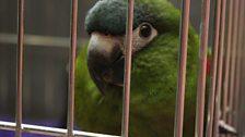 Napolean the parrot!