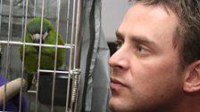 Napolean the parrot
