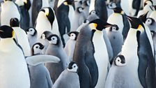 Emperor penguins warm in the cold