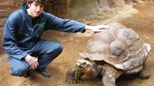 This is Dirk the tortoise, he's a bit of a heart throb in the enclosure!