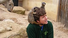...and the meerkats have accepted Greg as a member of their clan!