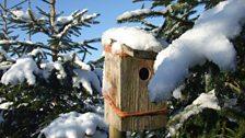 Snowy bird box