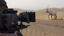 Meeting the Arabian oryx