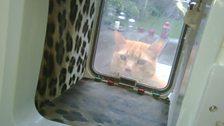 Ginger stalker March 2010