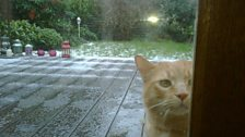 Ginger stalker January 2010