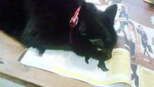 Fearne's cat catches up on fashion news