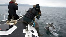 Filming Common Dolphins