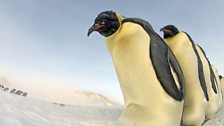 Penguins - Spy in the Huddle: In pictures