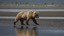 The Bears of Alaska: In pictures