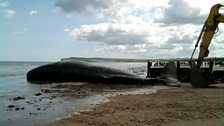 Efforts to move the whale from Redcar beach