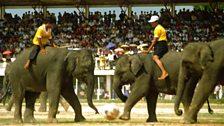Alastair Scott photography - Elephant Football