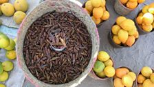 Basket of insects