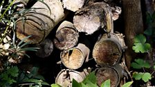 Small log pile - Habitat for insects