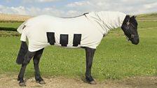 Ponies in Pyjamas