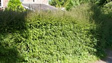 A garden hedge that provides food and shelter for wildlife.
